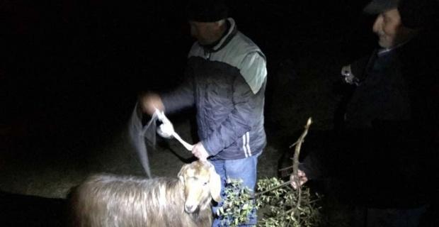 20 gündür kayalıklarda mahsur kalan keçiyi AKUT kurtardı