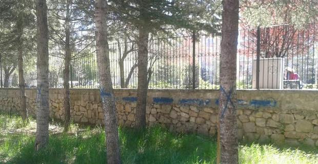 Yunus Emre Lisesi'ndeki ağaçlar kesilmeyi mi bekliyor