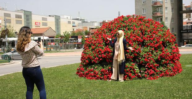 Eskişehir'de petunya şenliği başladı