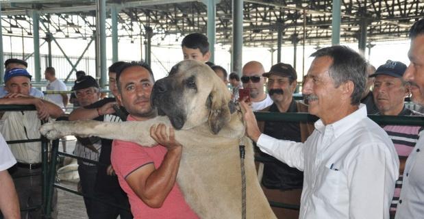 Küçükbaş Çoban Festivali'ne yoğun ilgi