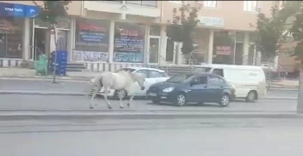 Tramvay yolunda sahipsiz at