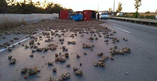 Traktör devrildi, yolu pancarlar kapladı