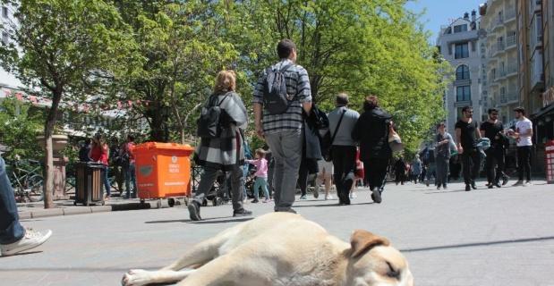 Kırdan kente hayvan göçü artıyor