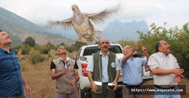 Sarıcakaya'da Keklikler Doğaya salındı