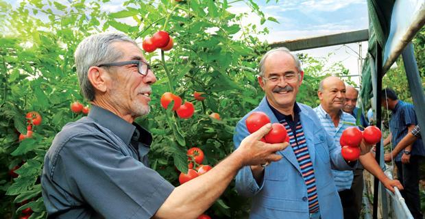 500 bin domates fidesi daha