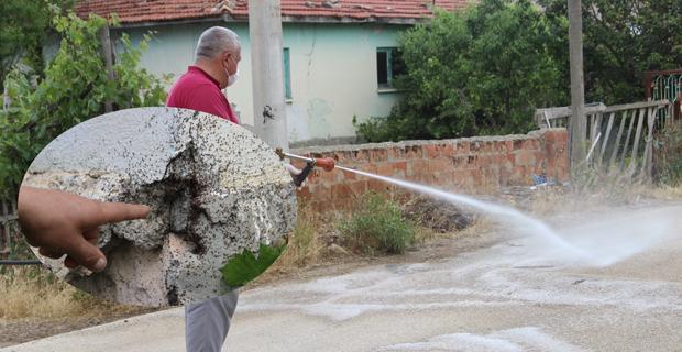 Yeşiltepe Mahallesi'nde böcek istilası