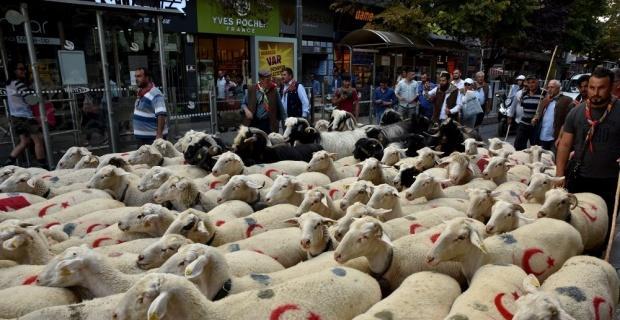 Çoban festivali renkli görüntüler ile başladı