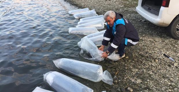 Yenice Barajına 2 bin yavru yayın balığı bırakıldı