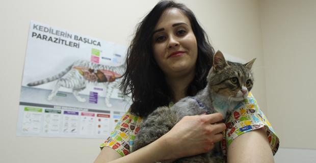 Sokak kedisini veteriner hekim kurtardı
