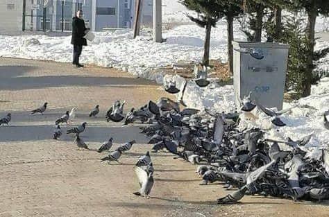 Her sabah kuşlar onu bekliyor
