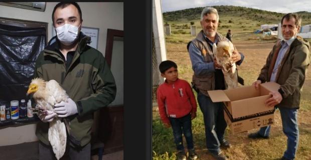 Uydu vericisi takılı küçük akbaba bulundu