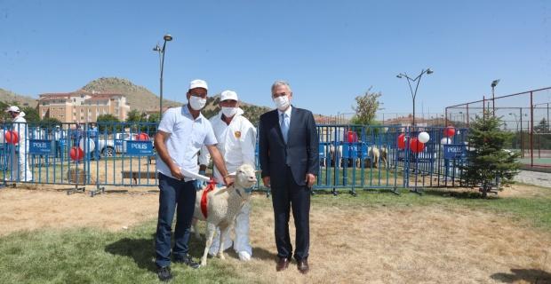Koyun ve Keçilerde Verimliliğin Artırılması Projesi