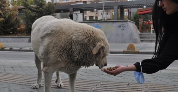 Onlar sokak hayvanları için ter döküyor