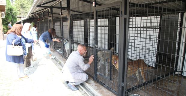 Geçici Hayvan Bakımevi bir süreliğine kapatıldı