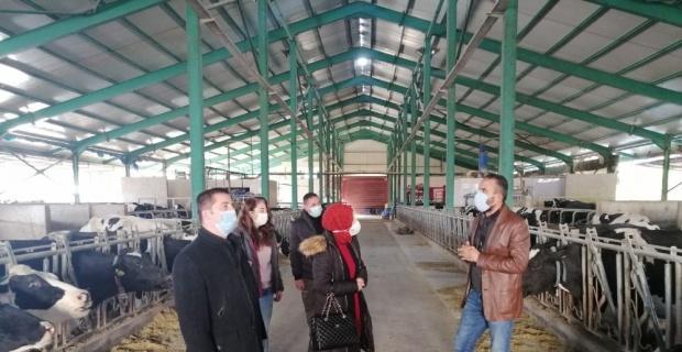 Besihane ve süt üretim tesisini incelediler