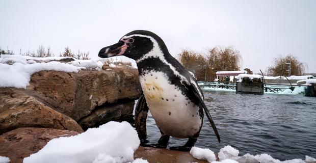 Hayvanat Bahçesi'nde Kar Sevinci