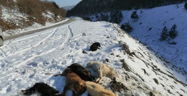 Köpekleri bayıltıp ölüme terk ettiler