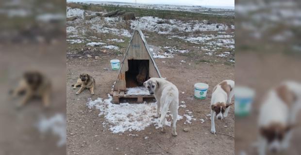 Sokak hayvanlarının dostları 'Organize Patiler' iş başında