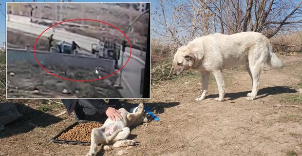 Sokak köpeklerinin kulübelerini çaldılar