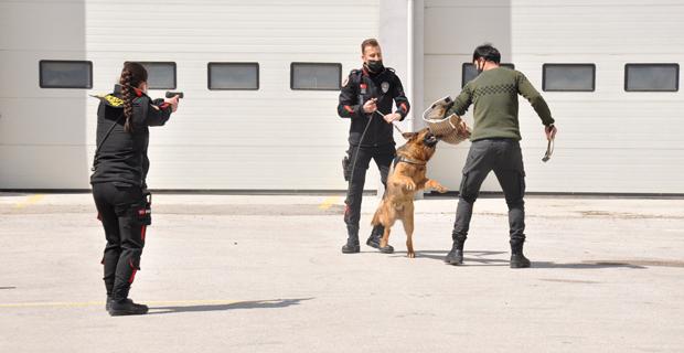 Sahne polis köpeklerinin