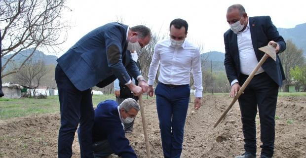 İlk kuşkonmaz fideleri toprakla buluştu