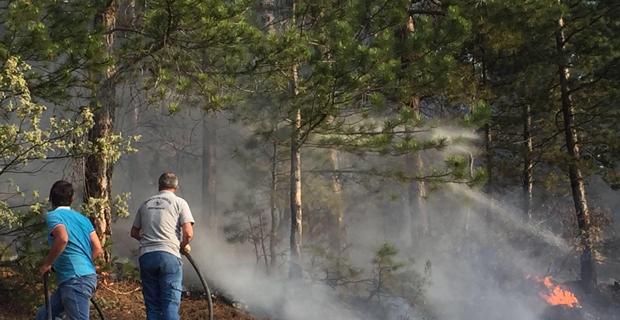 Seyitgazi'de orman yangını