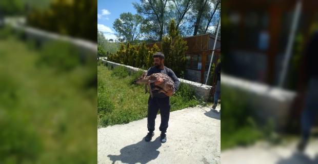 Yolunu şaşıran yavru geyiği doğaya bıraktı