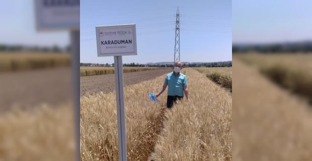 Bisküvilik buğday çeşit adayı tescil edildi