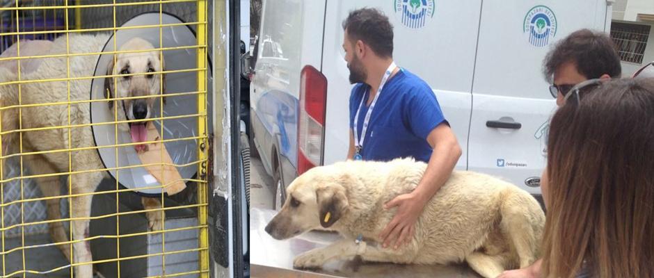 Yaralı köpeğe böyle yardım ettiler