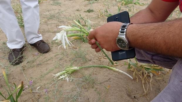 Kum zambağını koparana 48 bin lira ceza kesiliyor