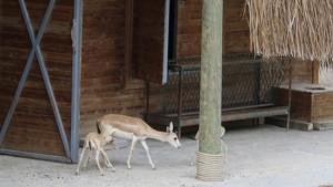 Eskişehir Hayvanat Bahçesi'nde Yavru Sevinci