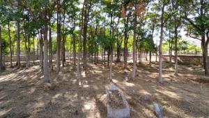 İki park arasında meçhul mezarlık